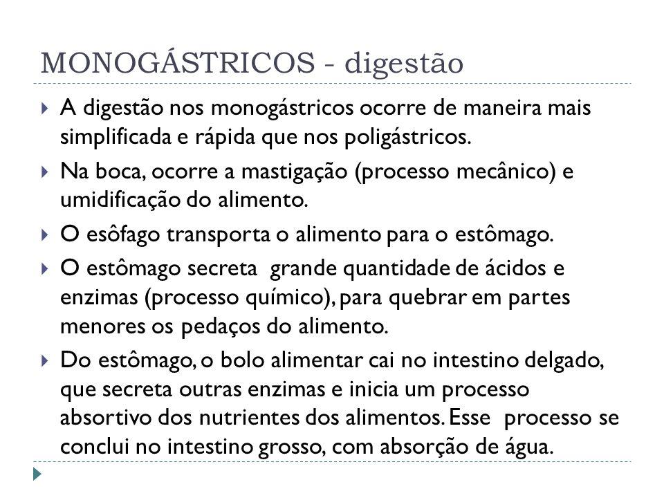 MONOGÁSTRICOS - digestão