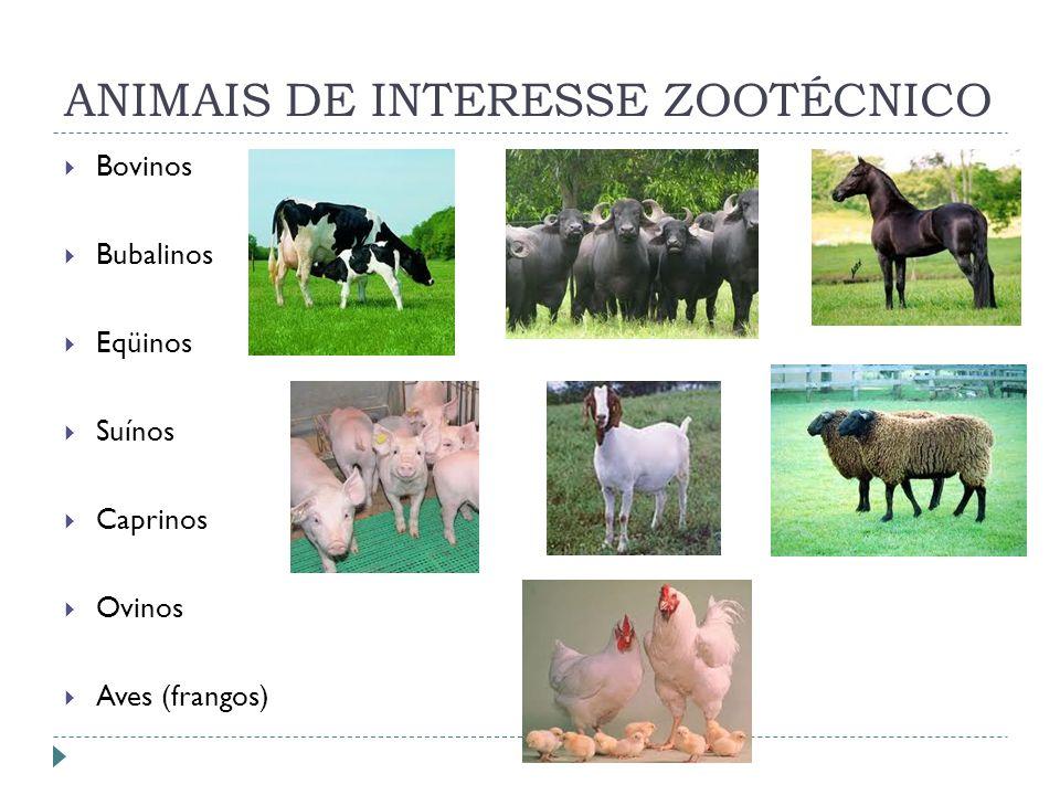 ANIMAIS DE INTERESSE ZOOTÉCNICO