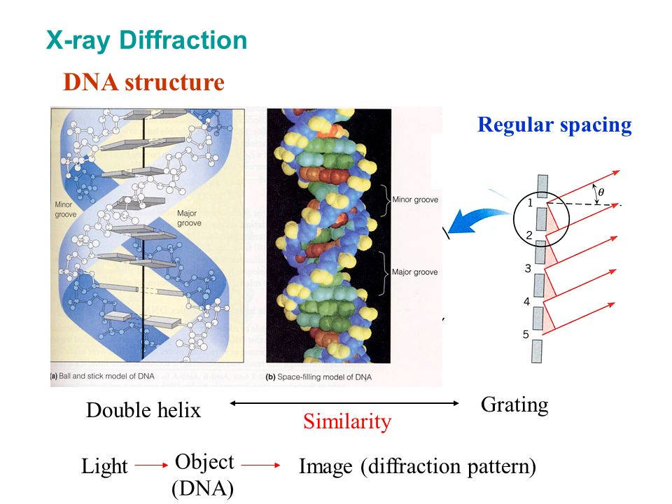 X-ray Diffraction DNA structure Regular spacing Double helix Grating