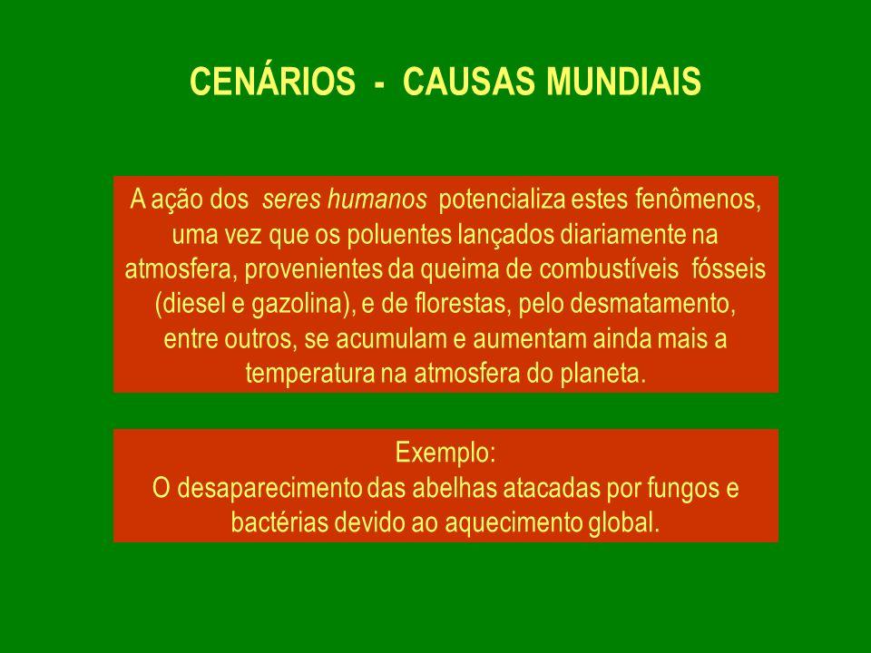 CENÁRIOS - CAUSAS MUNDIAIS