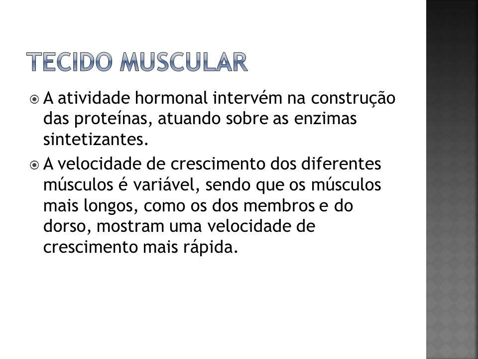 Tecido muscular A atividade hormonal intervém na construção das proteínas, atuando sobre as enzimas sintetizantes.