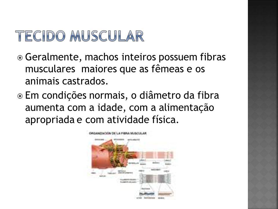 Tecido muscular Geralmente, machos inteiros possuem fibras musculares maiores que as fêmeas e os animais castrados.