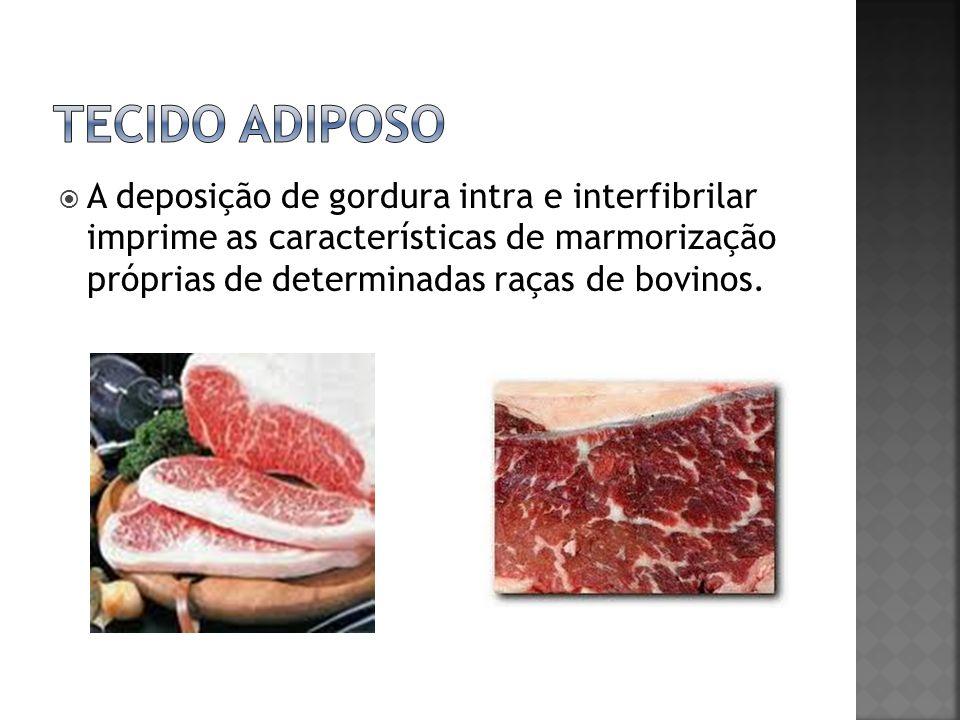 Tecido adiposo A deposição de gordura intra e interfibrilar imprime as características de marmorização próprias de determinadas raças de bovinos.