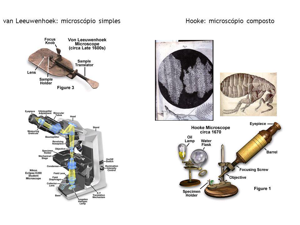van Leeuwenhoek: microscópio simples