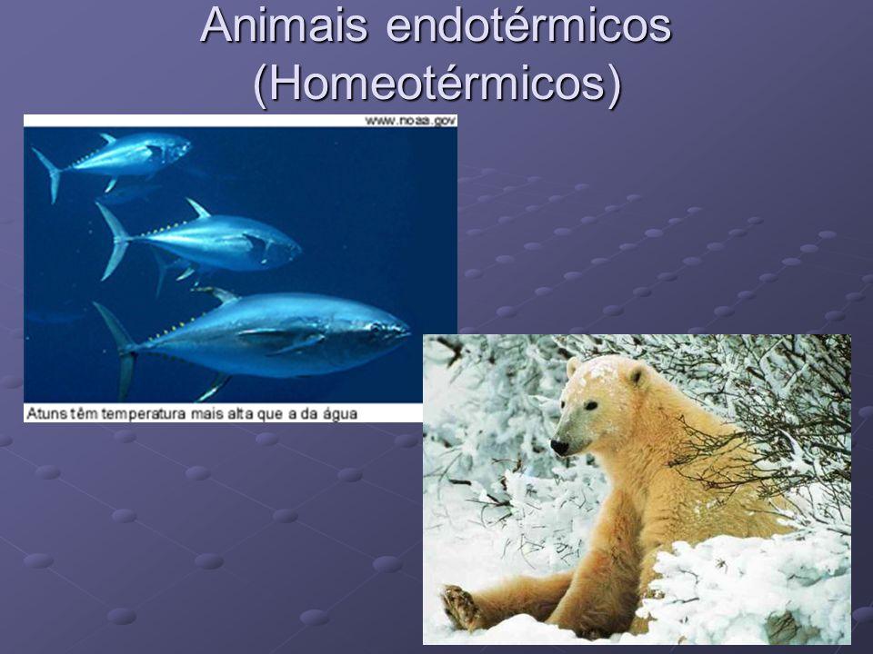 Animais endotérmicos (Homeotérmicos)
