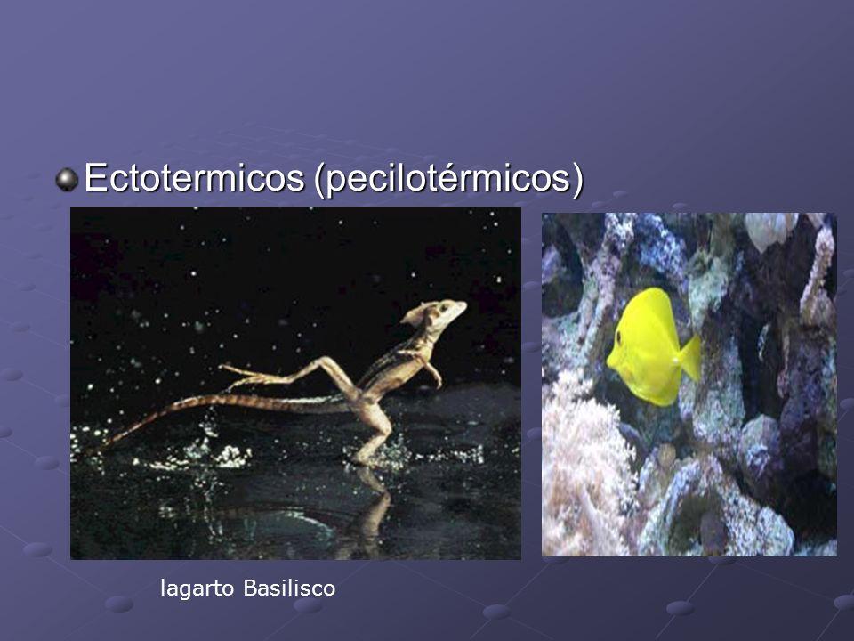 Ectotermicos (pecilotérmicos)