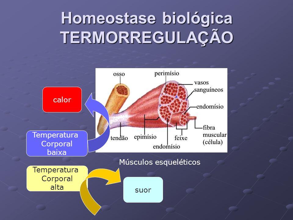 Homeostase biológica TERMORREGULAÇÃO
