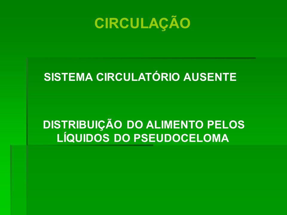 CIRCULAÇÃO SISTEMA CIRCULATÓRIO AUSENTE