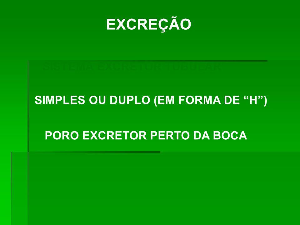 EXCREÇÃO SISTEMA EXCRETOR TUBULAR SIMPLES OU DUPLO (EM FORMA DE H )