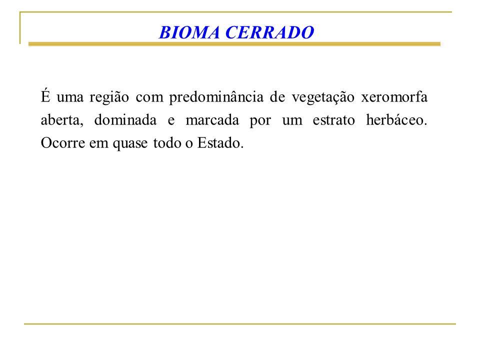 BIOMA CERRADO
