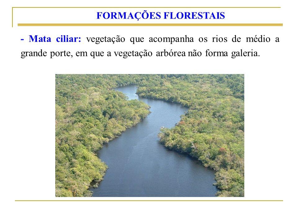FORMAÇÕES FLORESTAIS - Mata ciliar: vegetação que acompanha os rios de médio a grande porte, em que a vegetação arbórea não forma galeria.