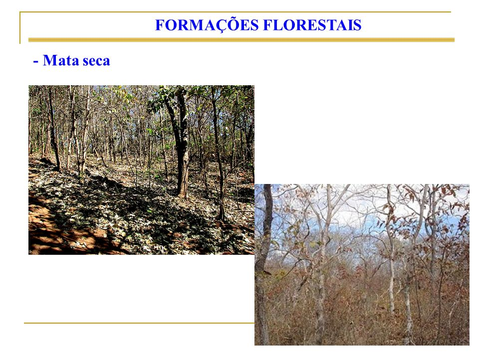 FORMAÇÕES FLORESTAIS - Mata seca