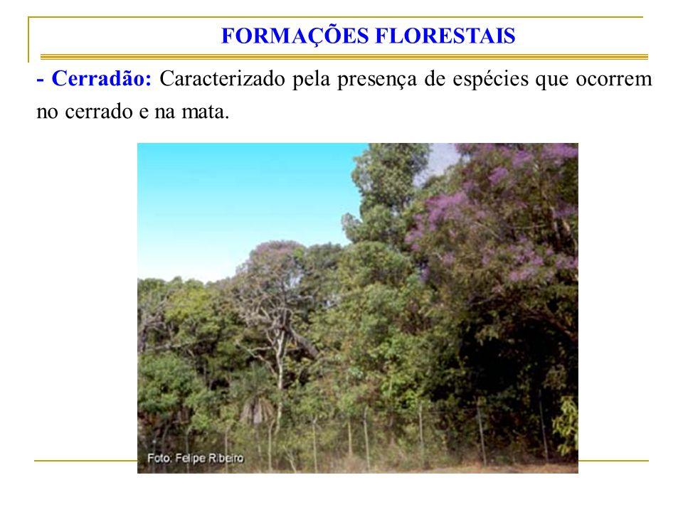 FORMAÇÕES FLORESTAIS - Cerradão: Caracterizado pela presença de espécies que ocorrem no cerrado e na mata.