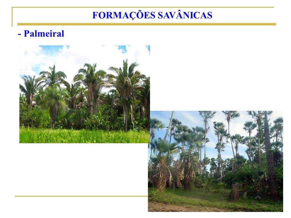FORMAÇÕES SAVÂNICAS - Palmeiral