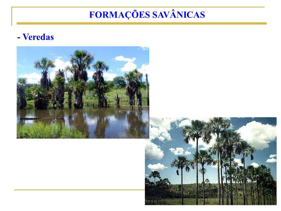 FORMAÇÕES SAVÂNICAS - Veredas