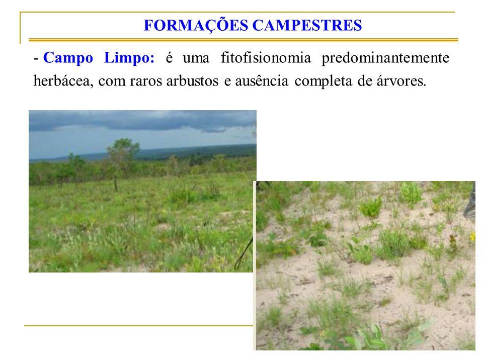 FORMAÇÕES CAMPESTRES Campo Limpo: é uma fitofisionomia predominantemente herbácea, com raros arbustos e ausência completa de árvores.