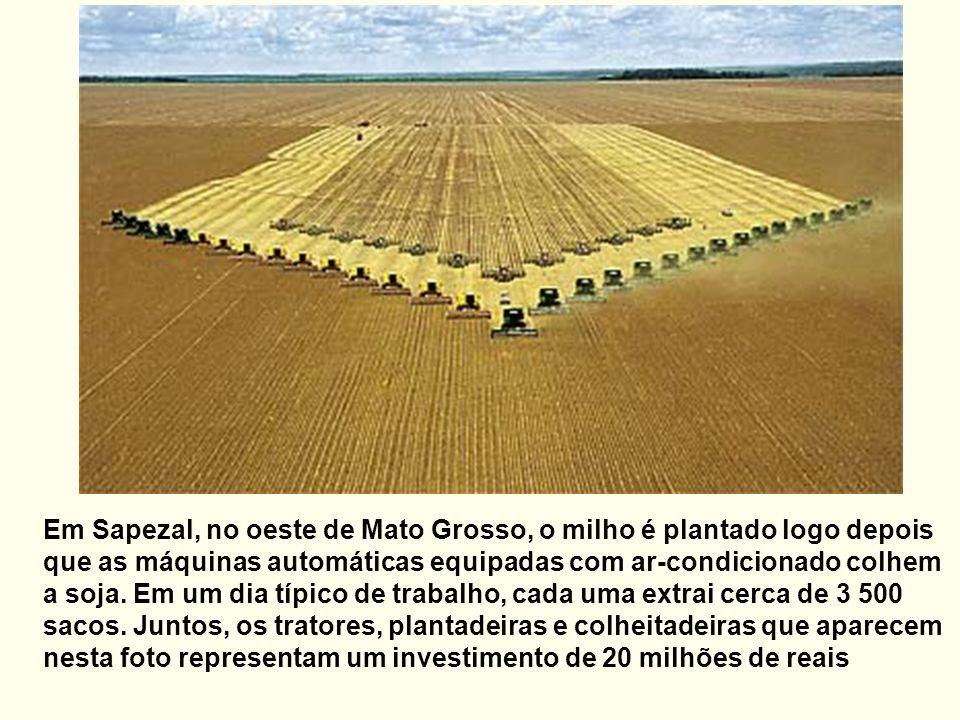 Em Sapezal, no oeste de Mato Grosso, o milho é plantado logo depois que as máquinas automáticas equipadas com ar-condicionado colhem a soja.