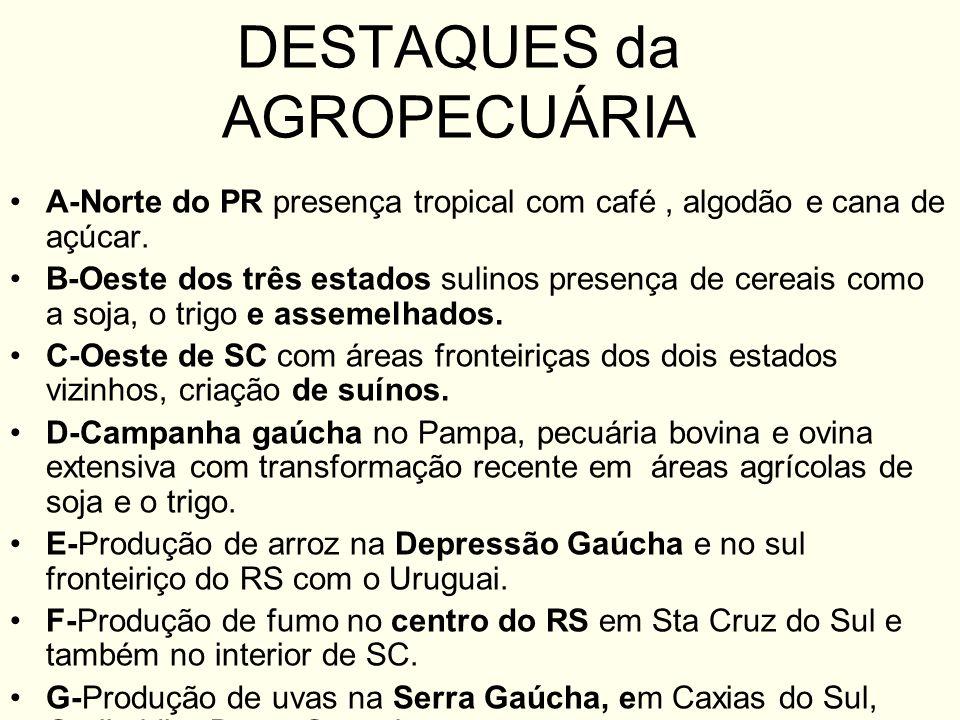 DESTAQUES da AGROPECUÁRIA