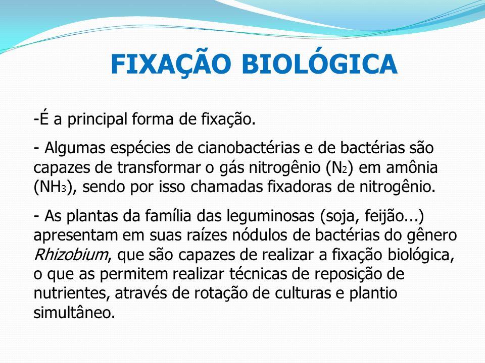 FIXAÇÃO BIOLÓGICA É a principal forma de fixação.