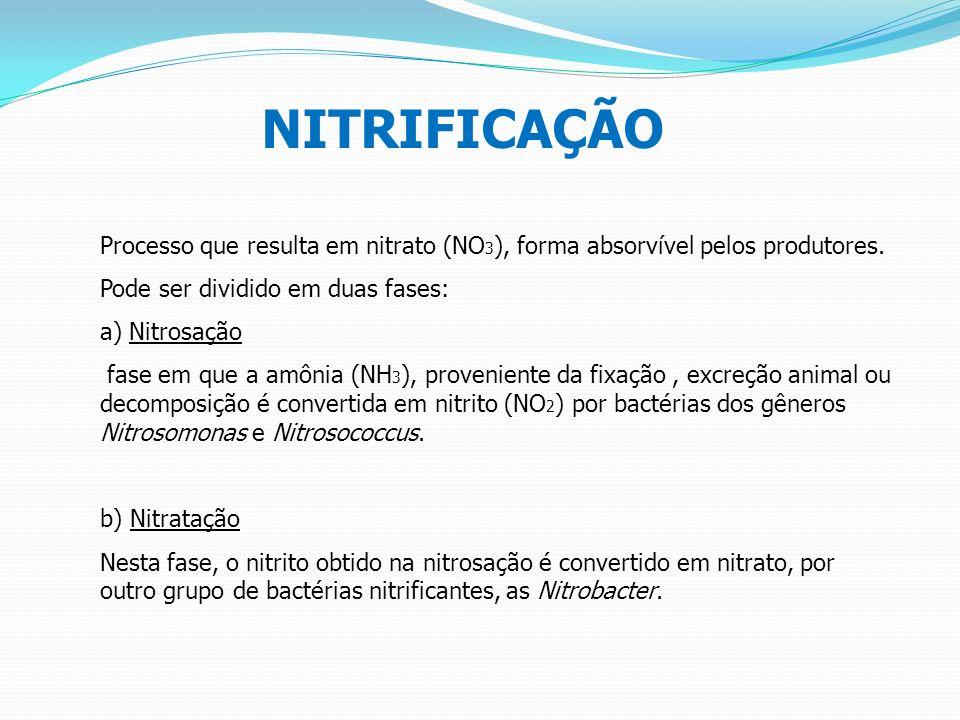 NITRIFICAÇÃO Processo que resulta em nitrato (NO3), forma absorvível pelos produtores. Pode ser dividido em duas fases: