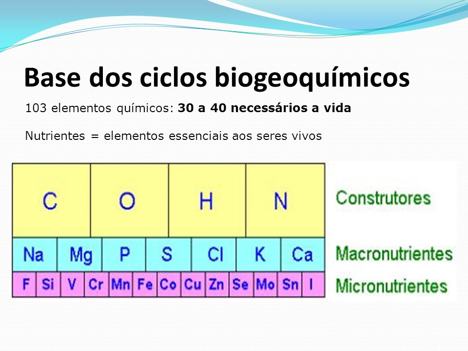 Base dos ciclos biogeoquímicos