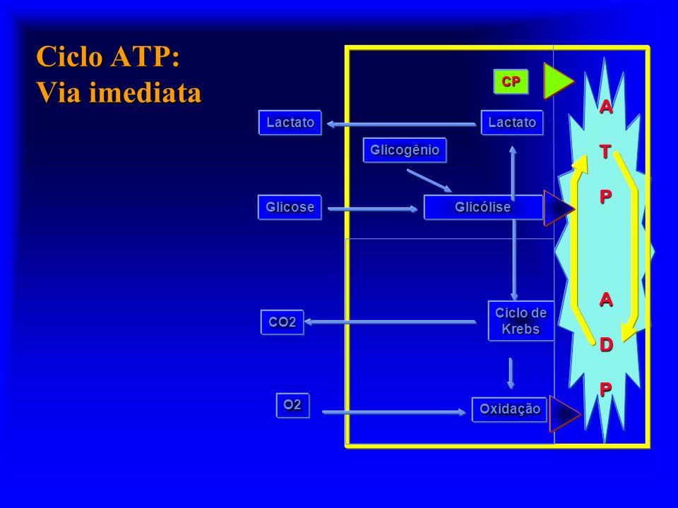 Ciclo ATP: Via imediata