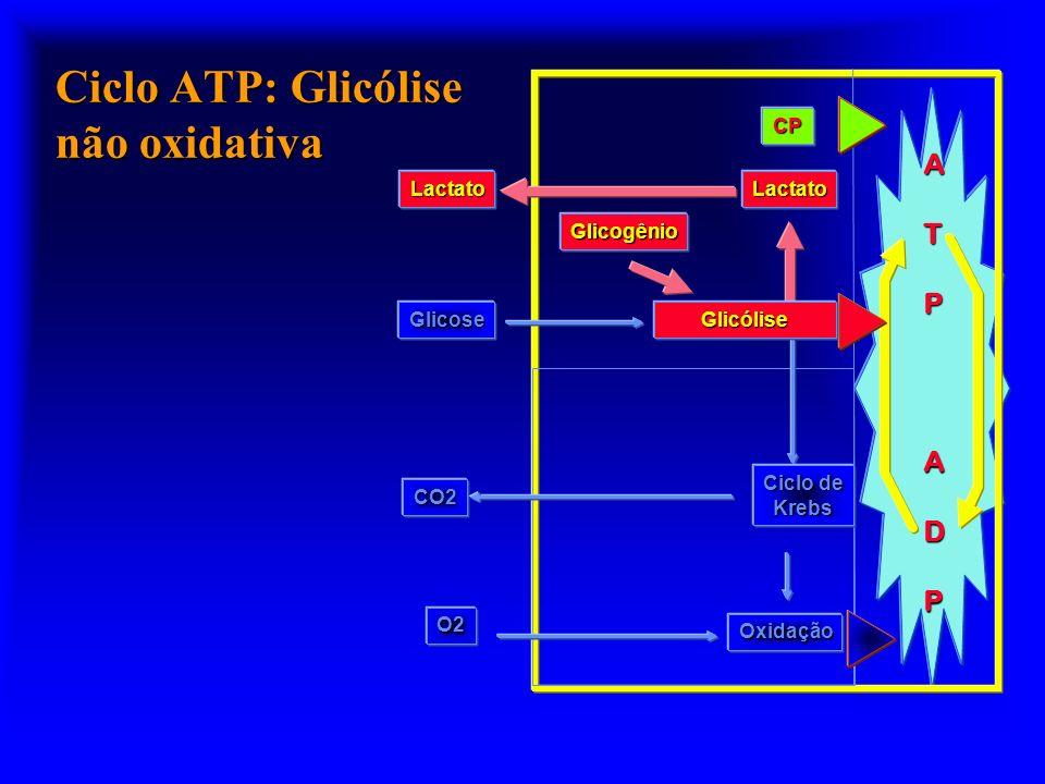 Ciclo ATP: Glicólise não oxidativa