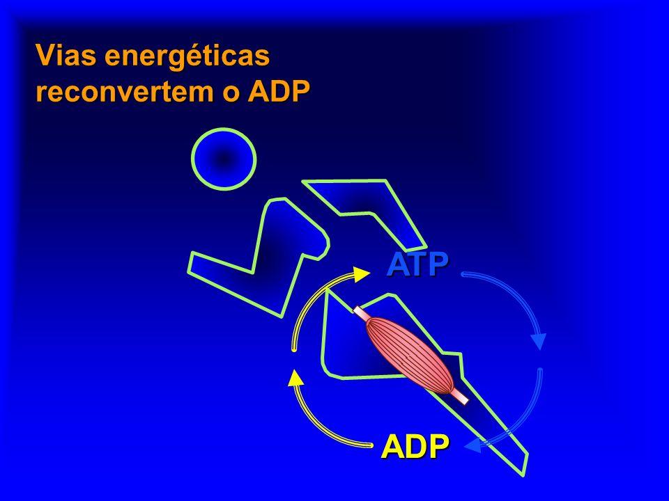 Vias energéticas reconvertem o ADP
