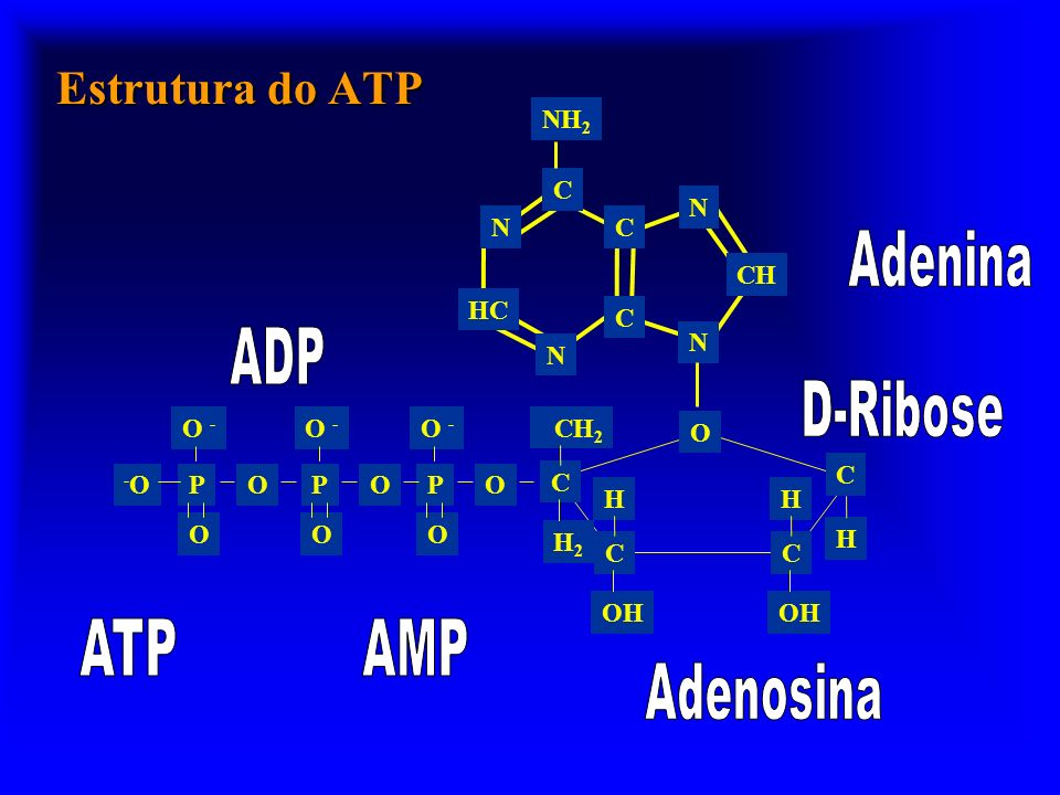 Estrutura do ATP Adenina ADP D-Ribose ATP AMP Adenosina N CH C HC NH2