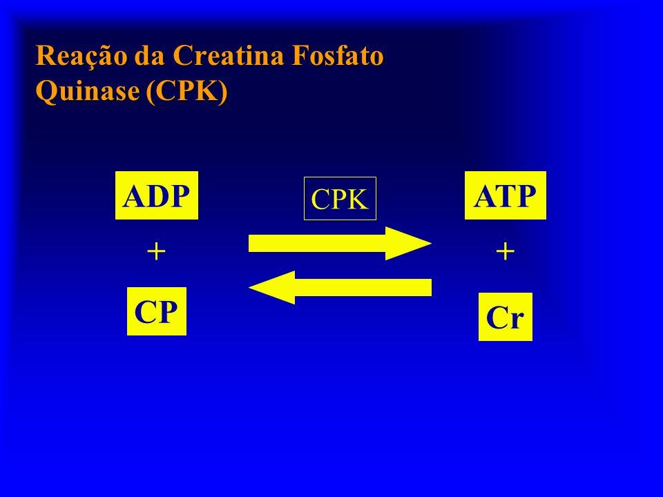 Reação da Creatina Fosfato Quinase (CPK)