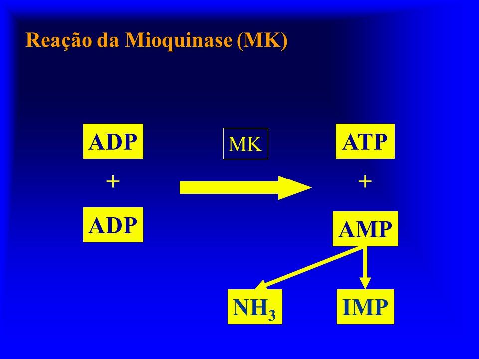 Reação da Mioquinase (MK)