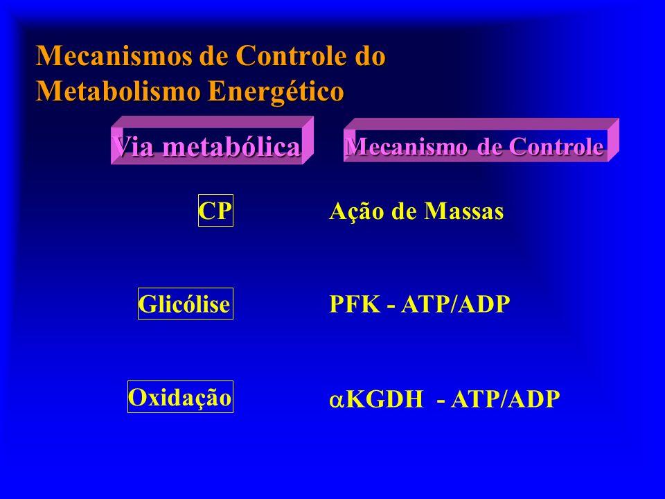 Mecanismos de Controle do Metabolismo Energético