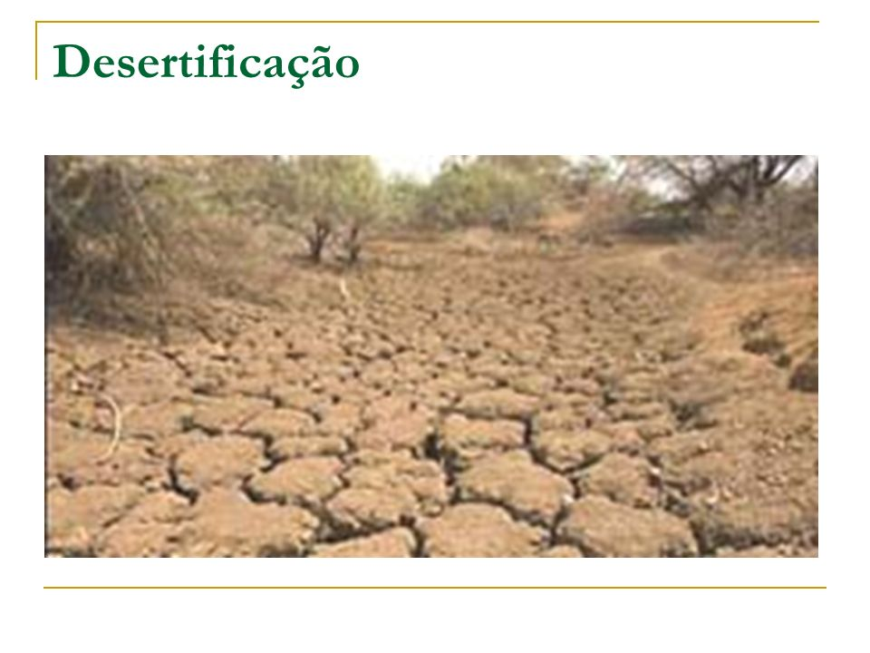 Desertificação