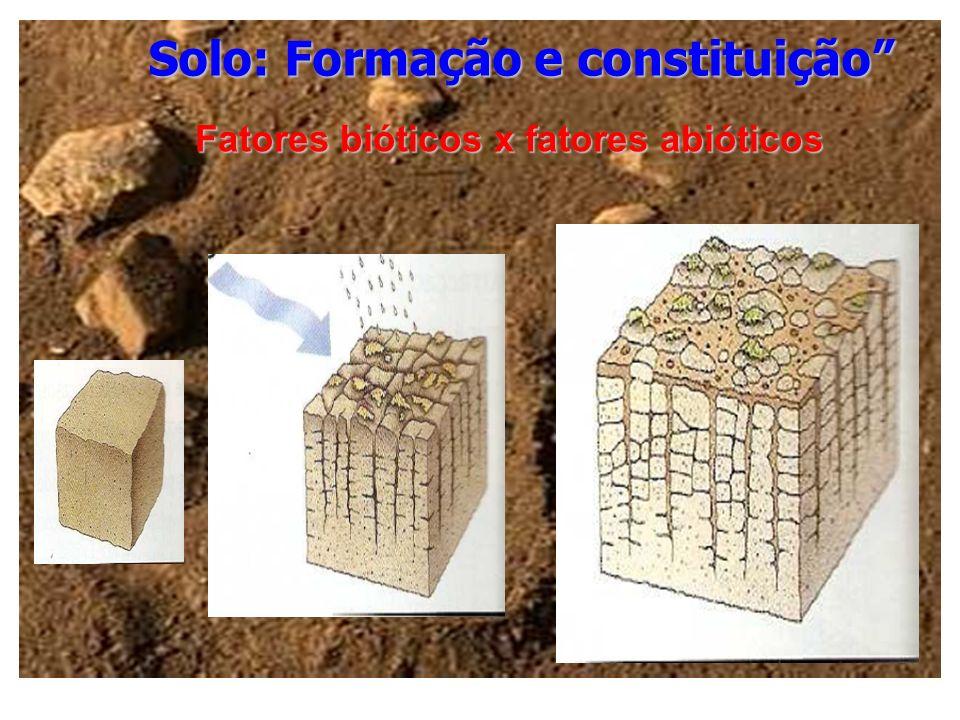 Solo: Formação e constituição