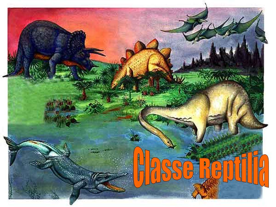 Classe Reptilia