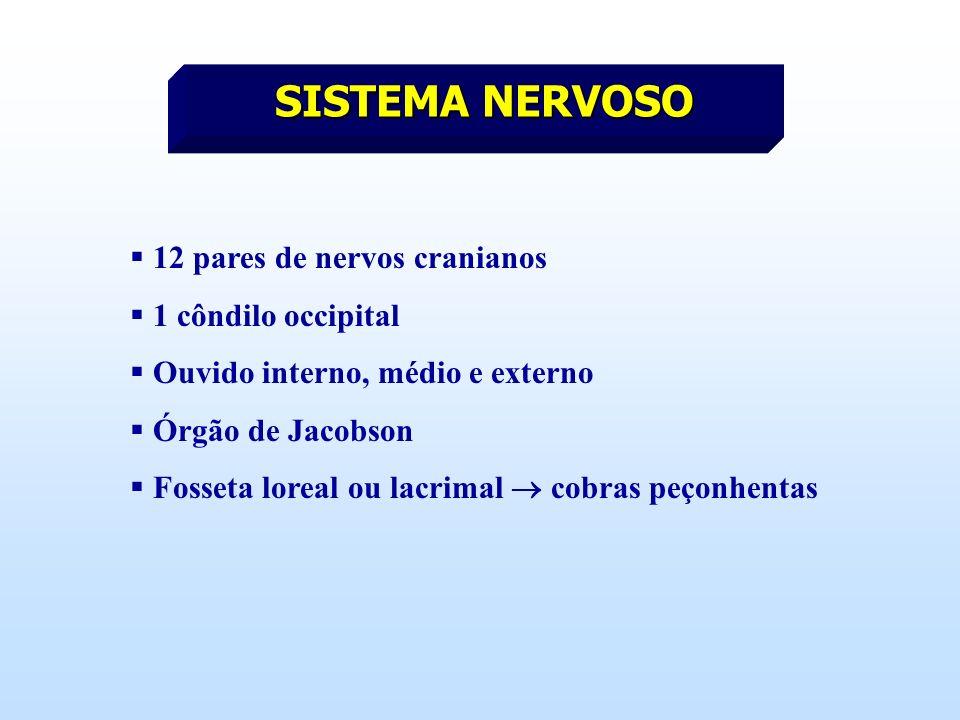 SISTEMA NERVOSO 12 pares de nervos cranianos 1 côndilo occipital
