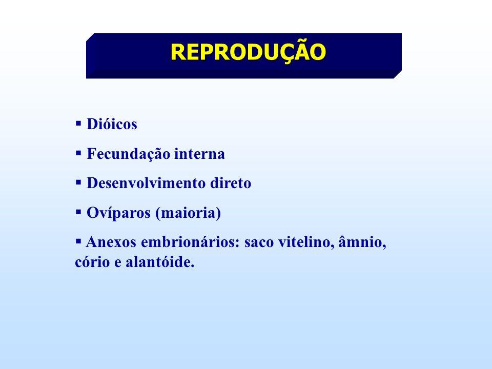 REPRODUÇÃO Dióicos Fecundação interna Desenvolvimento direto