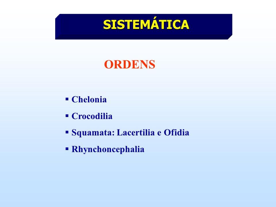 SISTEMÁTICA ORDENS Chelonia Crocodilia Squamata: Lacertilia e Ofidia