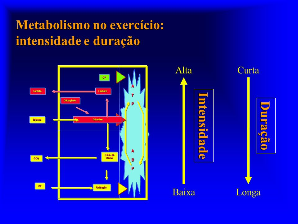 Metabolismo no exercício: intensidade e duração