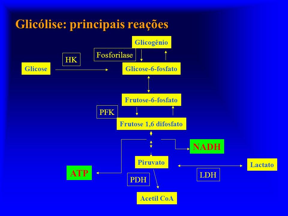 Glicólise: principais reações