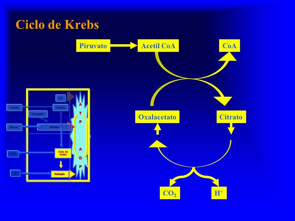 Ciclo de Krebs Piruvato Acetil CoA CoA Oxalacetato Citrato CO2 H+