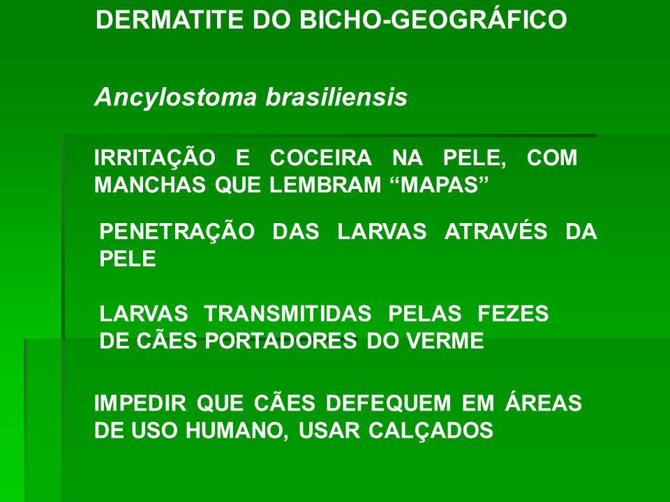 DERMATITE DO BICHO-GEOGRÁFICO Ancylostoma brasiliensis