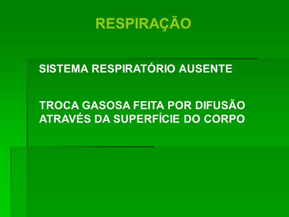 RESPIRAÇÃO SISTEMA RESPIRATÓRIO AUSENTE