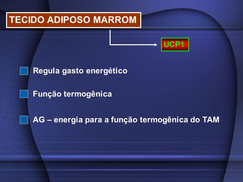 TECIDO ADIPOSO MARROM UCP1 Regula gasto energético Função termogênica