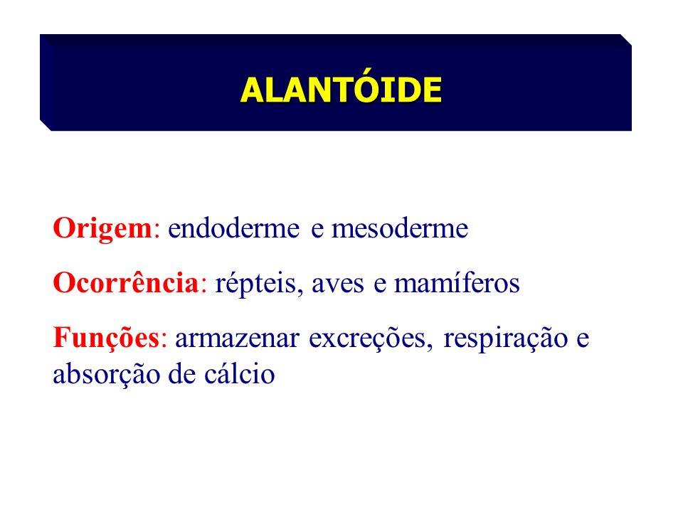 ALANTÓIDE Origem: endoderme e mesoderme