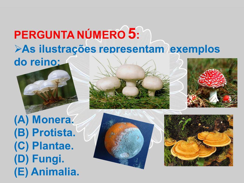 PERGUNTA NÚMERO 5: As ilustrações representam exemplos do reino: Monera. Protista. Plantae. Fungi.