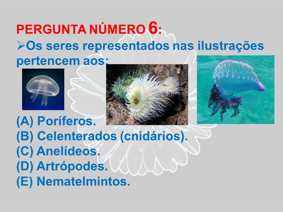 PERGUNTA NÚMERO 6: Os seres representados nas ilustrações pertencem aos: Poríferos. Celenterados (cnidários).