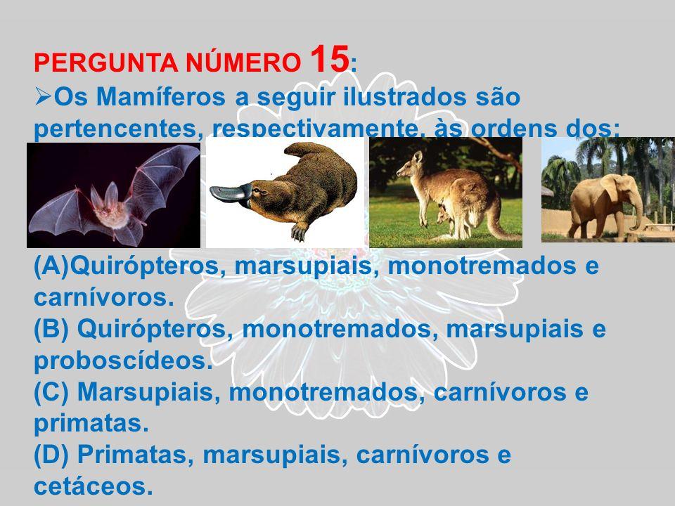 PERGUNTA NÚMERO 15: Os Mamíferos a seguir ilustrados são pertencentes, respectivamente, às ordens dos: