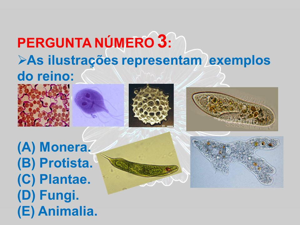 PERGUNTA NÚMERO 3: As ilustrações representam exemplos do reino: Monera. Protista. Plantae. Fungi.