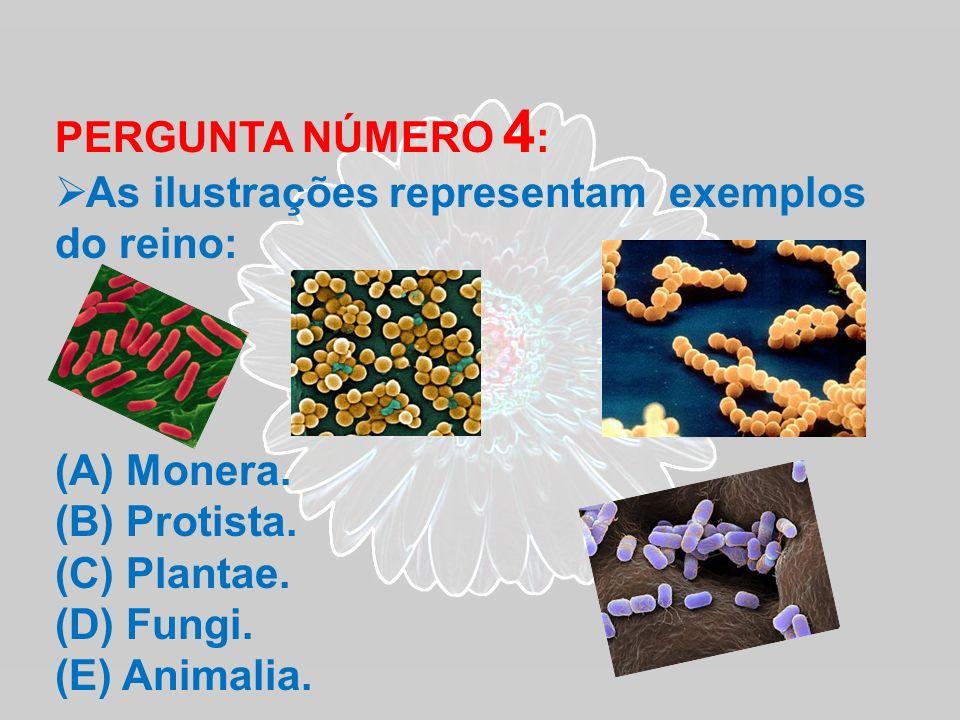 PERGUNTA NÚMERO 4: As ilustrações representam exemplos do reino: Monera. Protista. Plantae. Fungi.